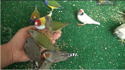 mohammeds birds